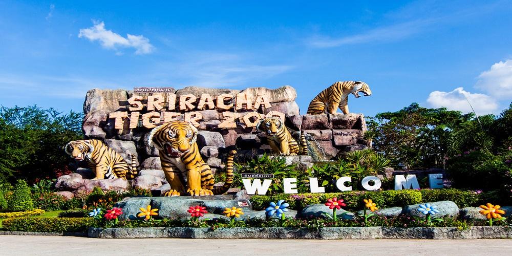 Công viên Sriracha Tiger Zoo CCV